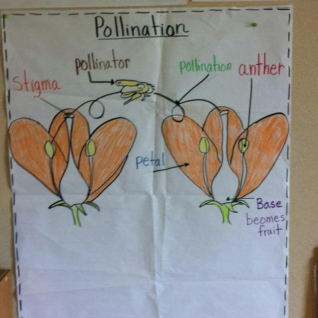 Pollination Plants Plant Science Pollination Plants Anchor Charts