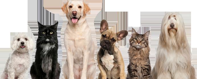 Traveling Veterinary Surgeon In Eastern Pa Dr Phil Zeltzman Allentown Pa Pet Resort Pets Reptiles Pet