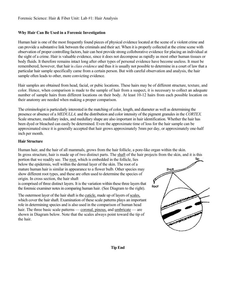 Hair And Fiber Evidence Worksheet Answers - A worksheet is ...