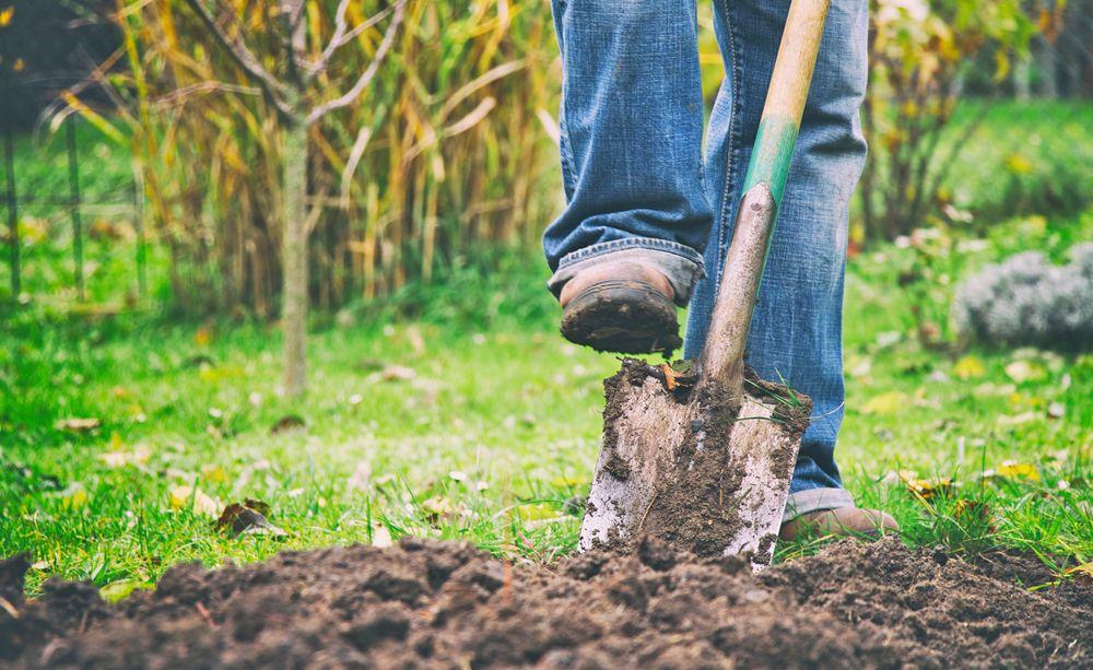 So Erneuern Sie Ihren Rasen Ohne Umgraben Rasen Erneuern Rasen Garten Neu Anlegen