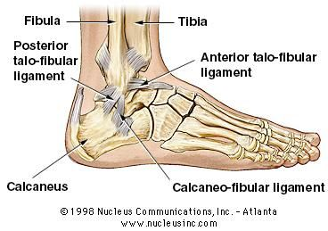 muscle strain and ankle bones on pinterest : ankle ligaments diagram - findchart.co