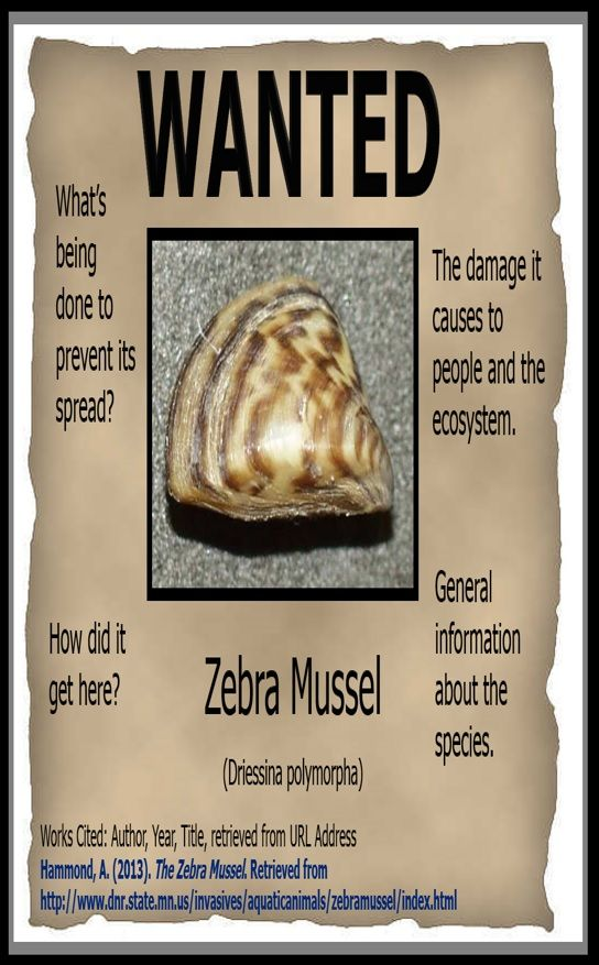 After learning about invasive exotic species I have the students - create a wanted poster free