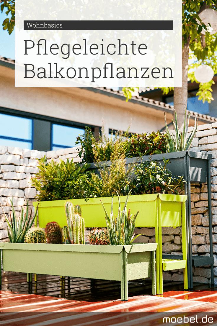 Pflegeleichte balkonpflanzen kein gr ner daumen mit den for Pflegeleichte balkonpflanzen