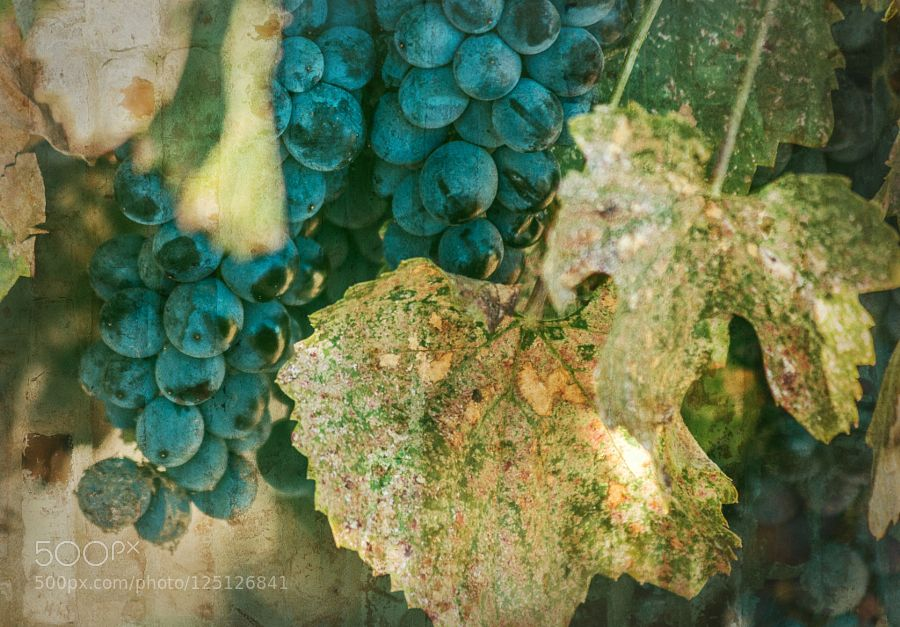 You're bound to get idears if you go thinkin' - Pinned by Mak Khalaf You're bound to get idears if you go thinkin' about stuff Fine Art autumngrapesgreenleavesplantredvinevineyard by CindyLuelling