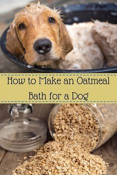 If Your Dog Has Dry Itchy Skin Then Try An Oatmeal Bath It S A Cheap Oatmeal Bath For Dogs Oatmeal Bath Dog Dry Skin