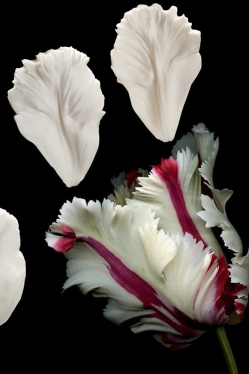 Flower Tulip Petal Silicone Mold Fondant Texture Sugarcraft Cake Decorating Tool