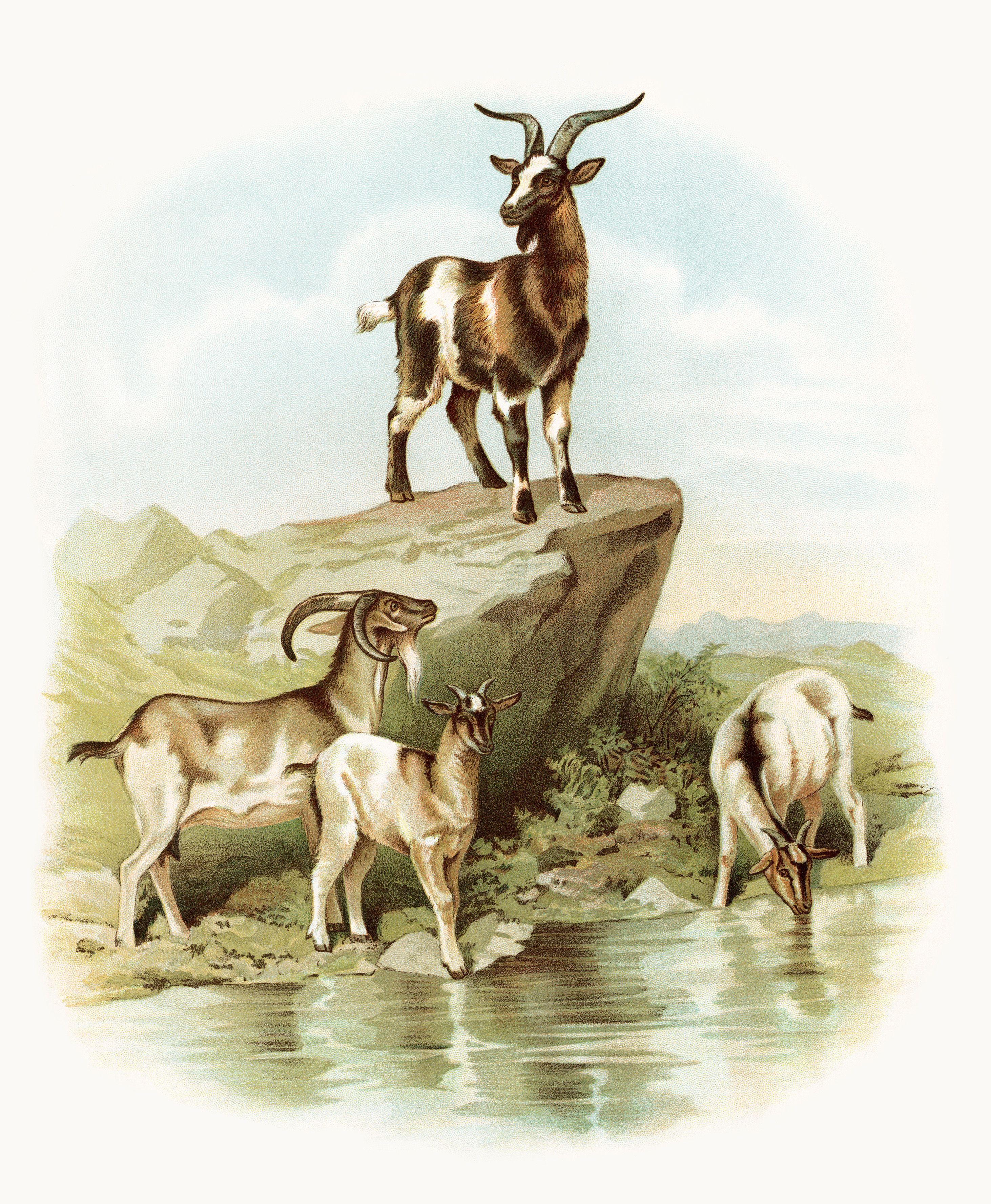 Free Vintage Image Goats at the Farm Animal printables