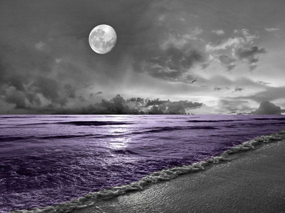 Black White Purple Home Decor, Coastal Ocean Moon  Purple Bathroom Bedroom Wall Art Matted Picture is part of White Purple bedroom - (Color) Black White Purple All pictures are printed on Professional Luster Photo Paper  This makes for less glare, shine, and makes the image easier to see at all angles  I mat all pictures inside a white Mat, which serves as additional decoration to the picture when placed inside a picture frame  This picture is available in 2 different sizes  8x10 matted to 11x14 white Mat (Fits inside a 11x14 Inch Frame)           For small spaces 11x14 matted to 16x20 white mat  (Fits inside a 16x20 inch frame)           For Larger spaces Please Note Picture Frame Not included, Matted Only Shipping discounts on applied when you purchase more then 1 item