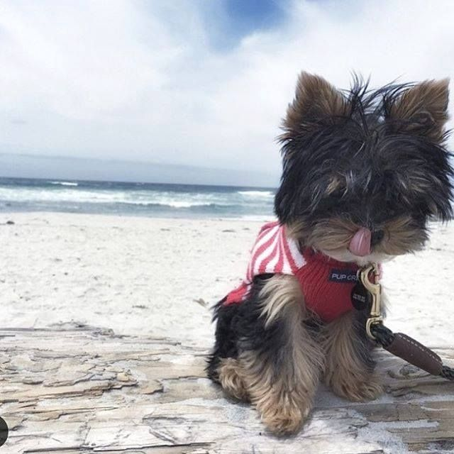 Can it be beach day?  Found at: http://bit.ly/1PMpK9Y