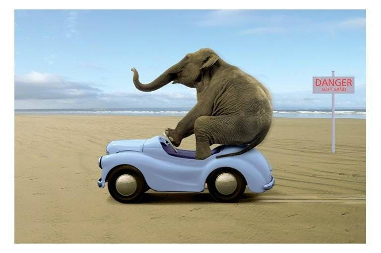 Travel Around Spain Buying A Car In Spain Car Insurance Rates Traffic Cameras And Other Stuff Funny Elephant Elephant Animal Posters