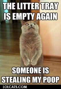The litter tray is empty again...