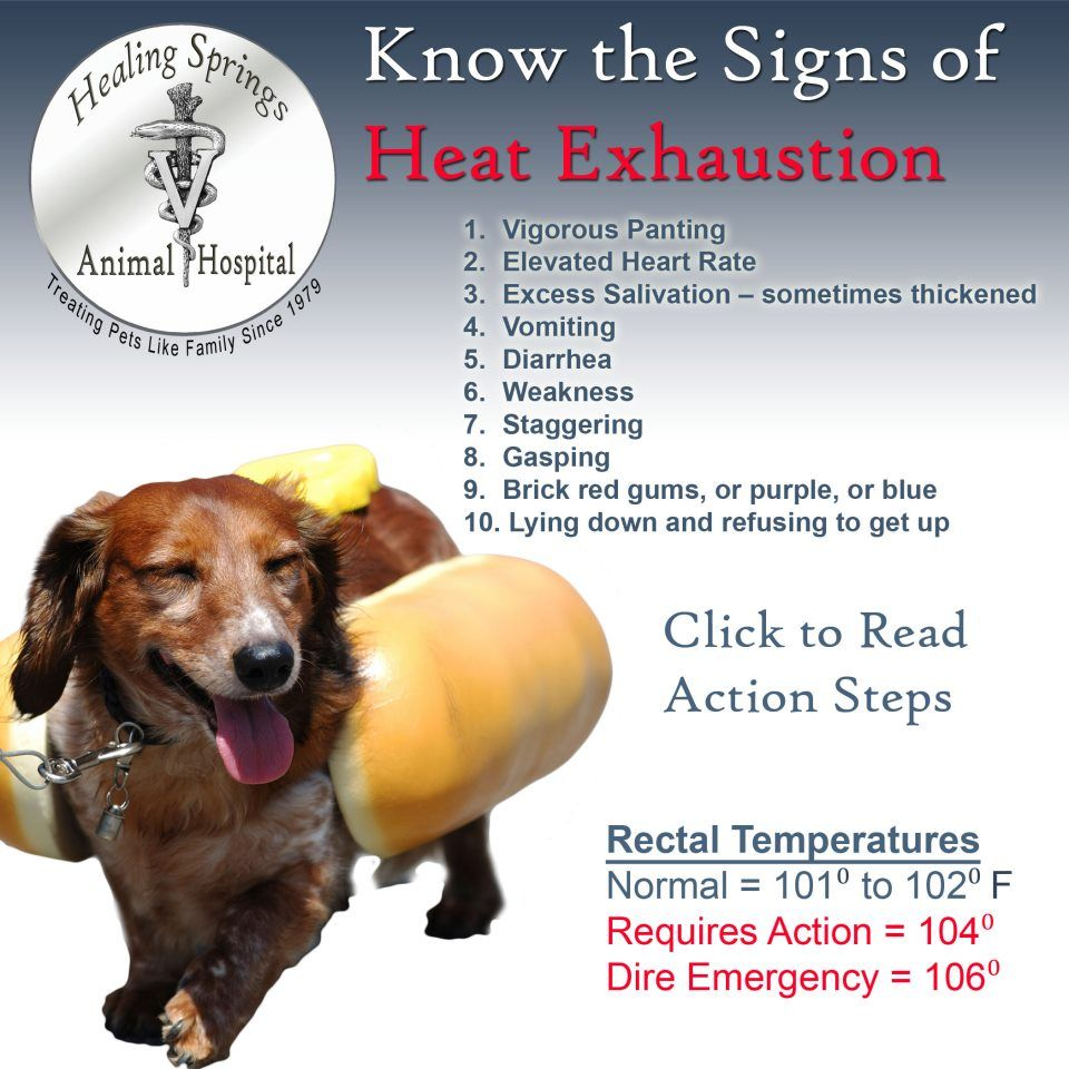 Heat Exhaustion Signs Action Steps Immediately Reduce Body Temperature Move Dog To Shade Or Air Conditioned Room G Pets Animal Hospital Heat Exhaustion