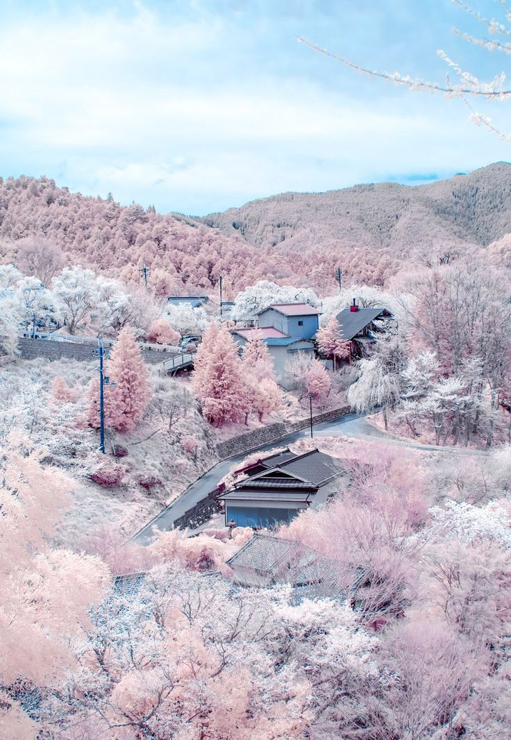 A hillside awash in the pastel pinks of blooming cherry blossoms in Nara, Japan, is a swoon of romance and natural beauty