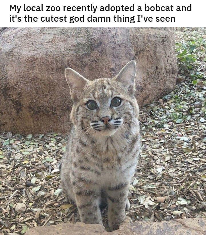 Lustige Tiere Meme Bilder des Tages (40+ Bilder) | Memesplus
