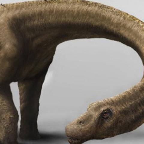 15 Ideas De Paleontología Paleontología Fosiles Fósiles De Dinosaurios