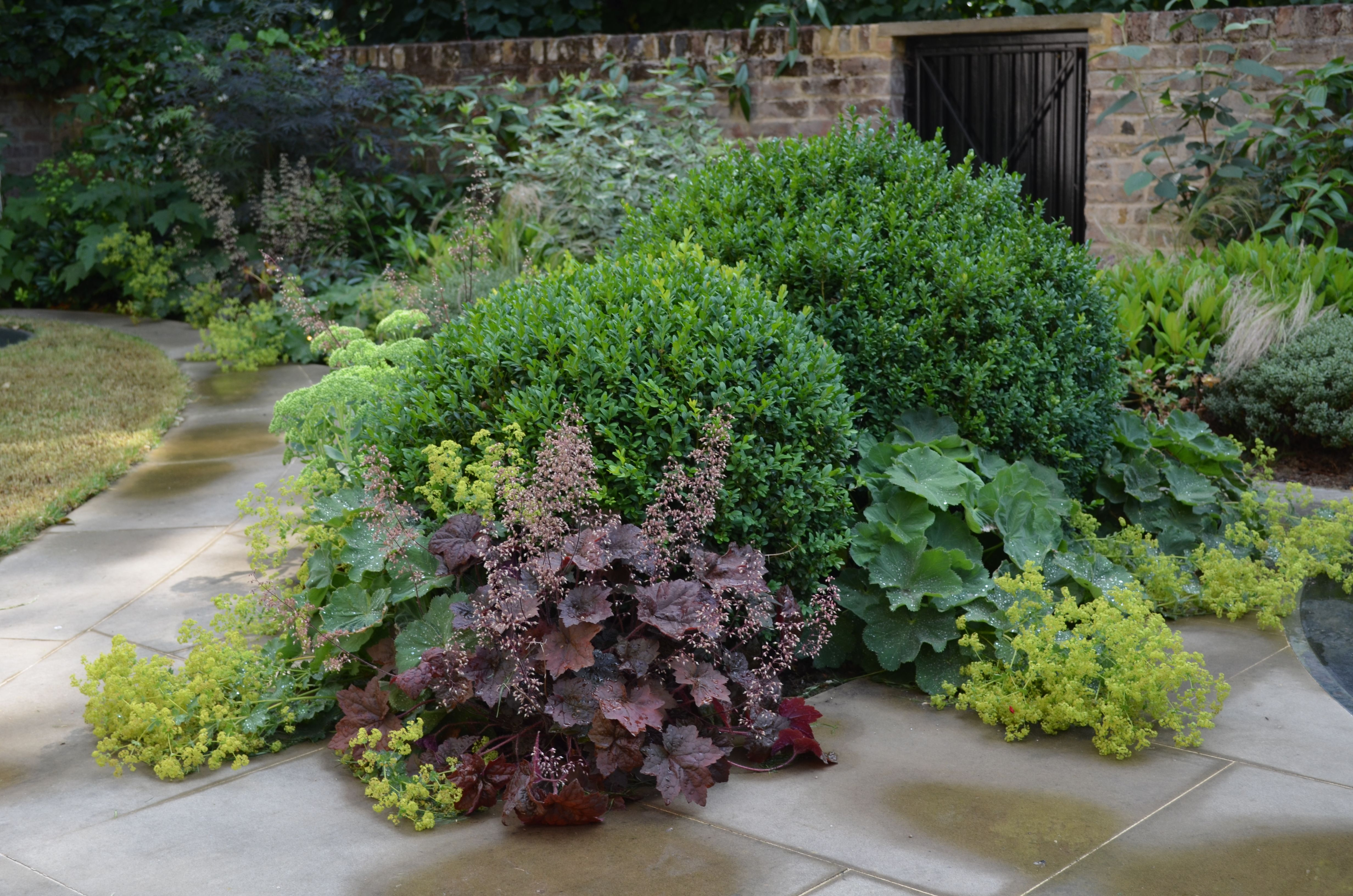 knightsbridge garden with large buxus balls underplanted with