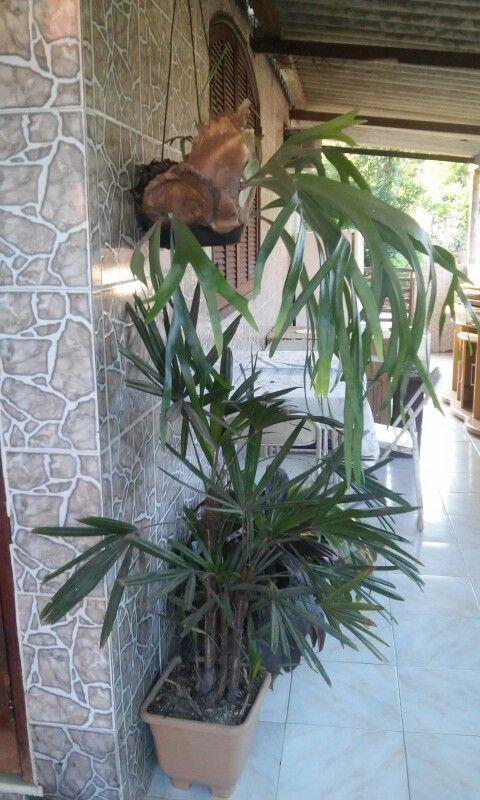A delicia e ter uma varanda tropical. Doce lar.
