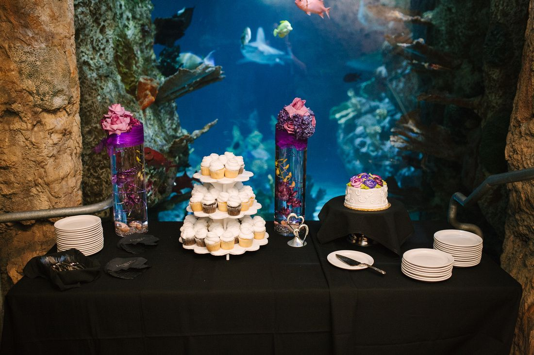 Wedding At The Point Defiance Zoo And Aquarium