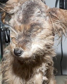 Saved Two Starved Pups Who Were Tethered In Freezing Temperatures Puppies Animals Pet News