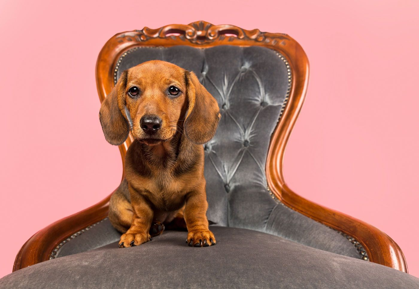 Behind The Scenes At A Mutley S Snaps Studio Pet Photography
