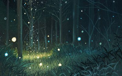 Forest Night Hd Wallpaper Night Forest Night Landscape Forest Wallpaper