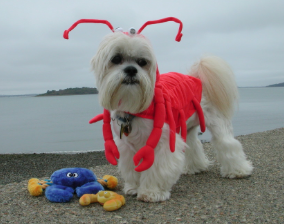 Do You Think Of This Pet Costume Entry Lobster Lifestyle Is Your Dog Ready To Join In On The Halloween F Dog Halloween Costumes Dog Halloween Pet Costumes