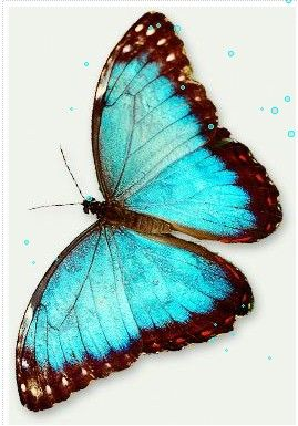 gorgeous blue butterfly