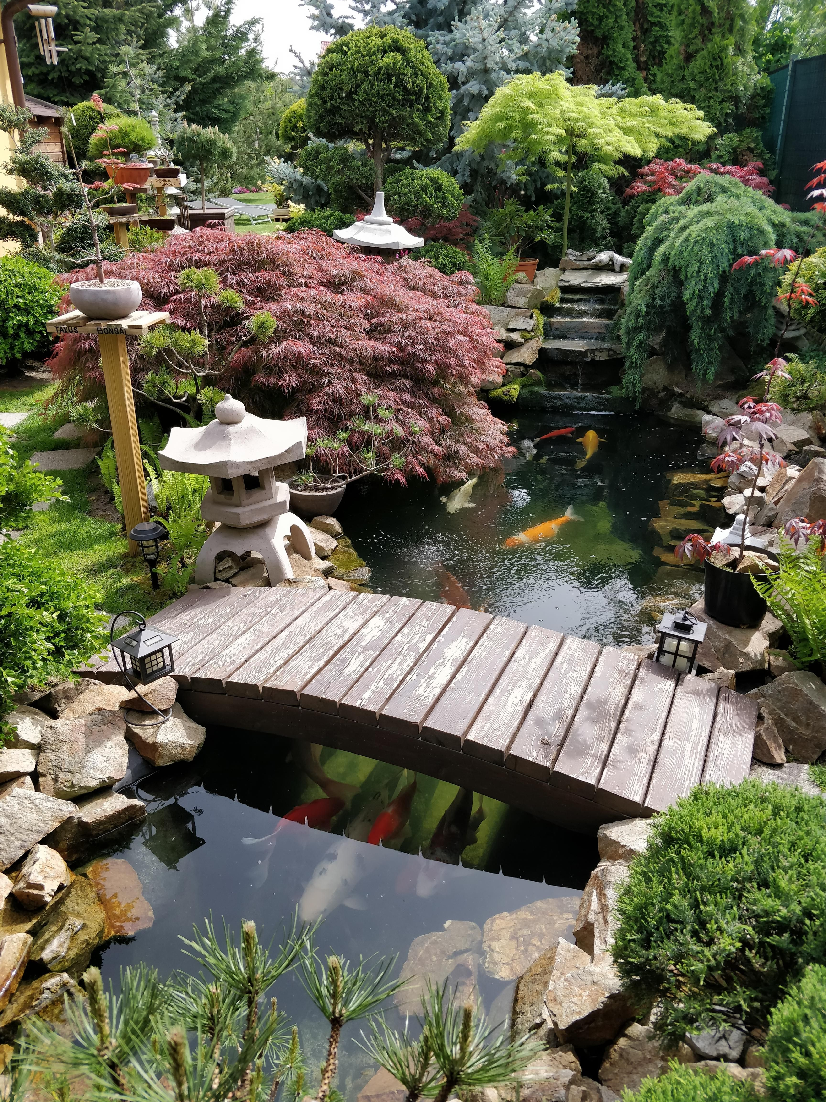 I M Back With Another Photo Of My Dad S Japanese Garden On The First Sunny Day Of 2019 Gardening In 2020 Garden Pond Design Japanese Garden Design Ponds Backyard