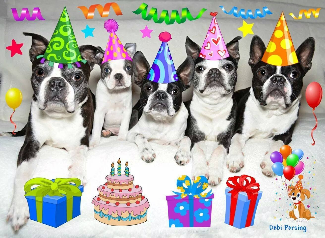 Let S Get This Party Started Boston Terrier Dog Boston Terrier Love Boston Terrier Puppy