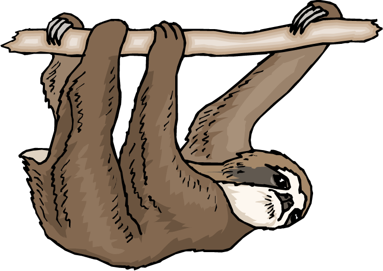 october 6 2016 we played sloth says like simon says except do rh pinterest com sloth face clipart sloth clipart images