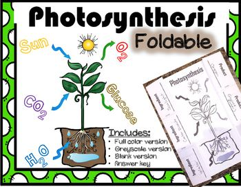 photosynthesis foldable how plants make food tpt science lessons rh pinterest com