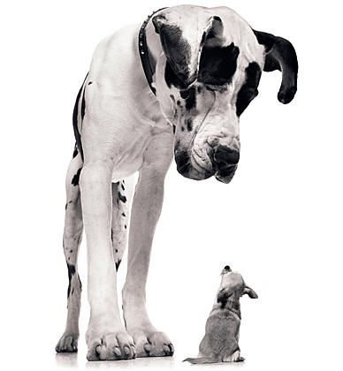 I Should Try Getting A Picture Like This Of Our Great Dane And Tea