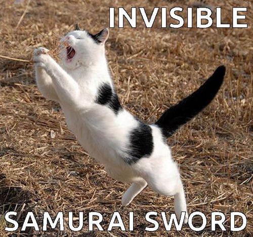 Throw Back Thursday Cat Memes I Can Has Cheezburger