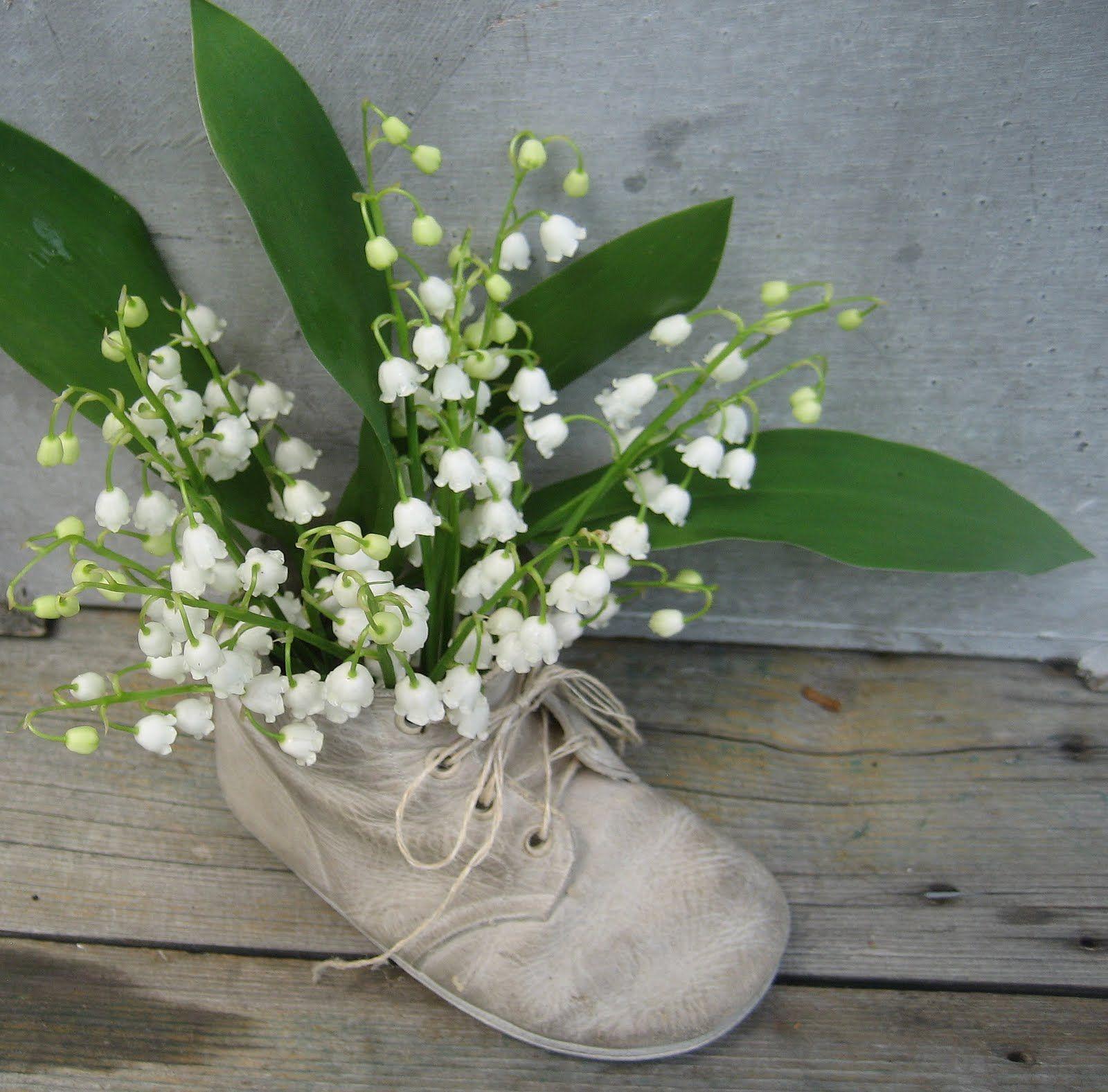 чистка это цветок в ботинке фото меня, например
