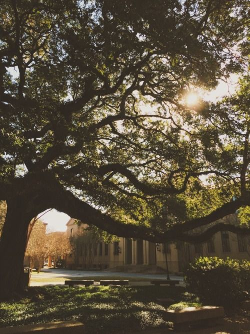 """preppycajun:  """"Where stately oaks and broad magnolias…"""""""