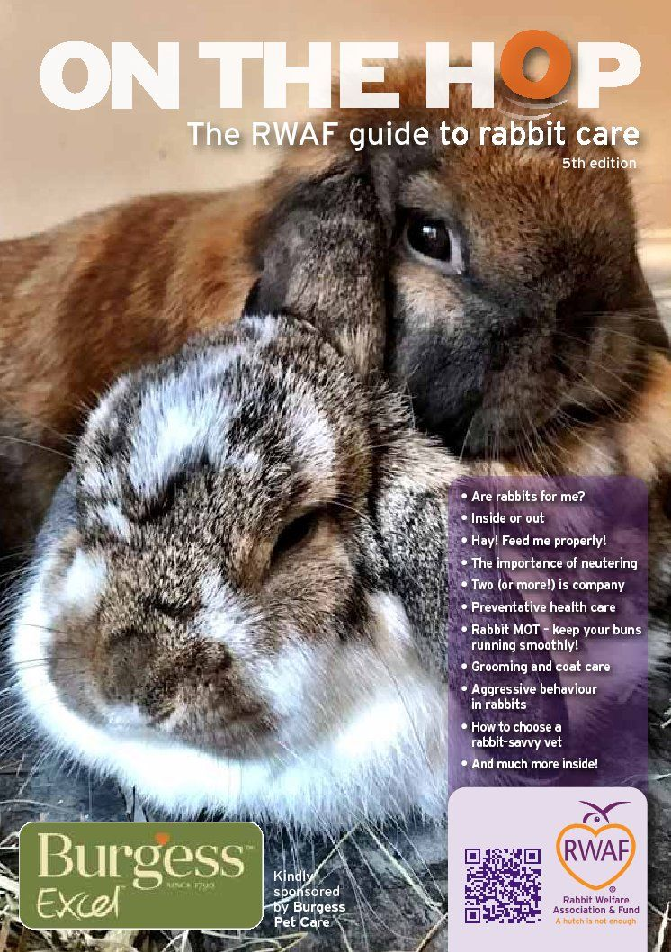 Care Booklet in 2020 Rabbit care, Pet rabbit care, Pet bunny