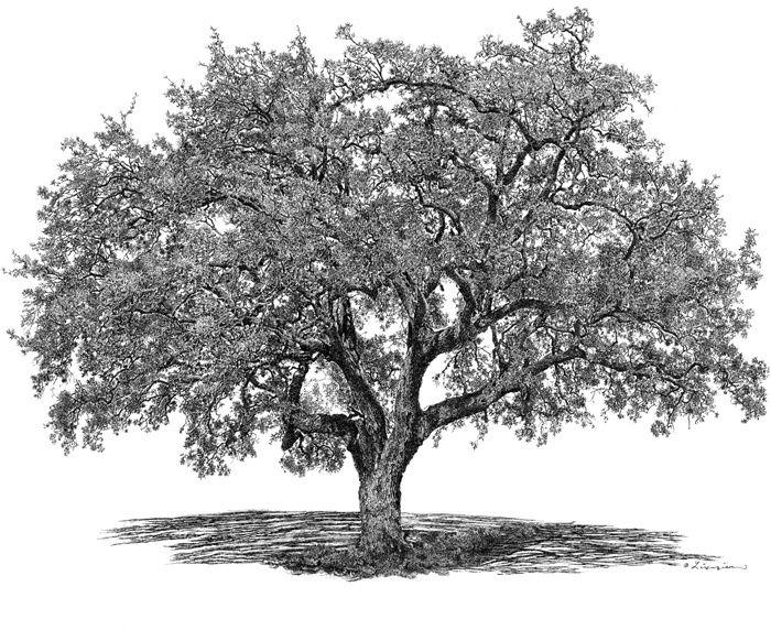 Are You Following The Crowd Off A Genealogy Cliff Oak Tree Tattoo Oak Tree Drawings Tree Drawing