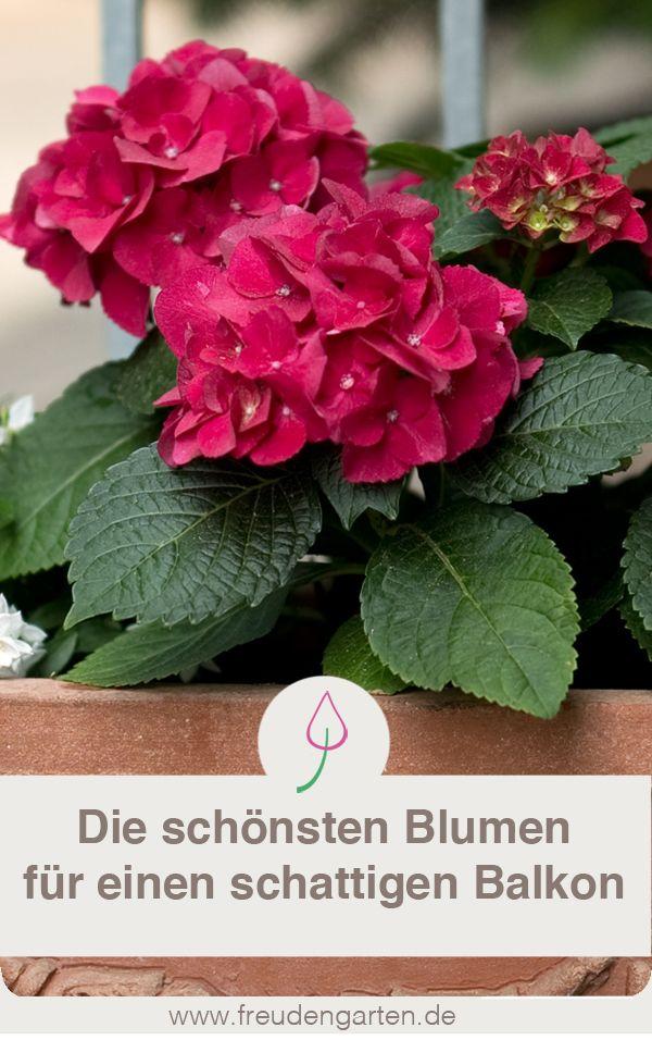 schattenpflanzen f r den balkon gartentipps balkon. Black Bedroom Furniture Sets. Home Design Ideas