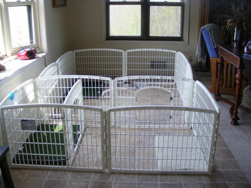 Love This Breeder Setup For Puppy Nursery