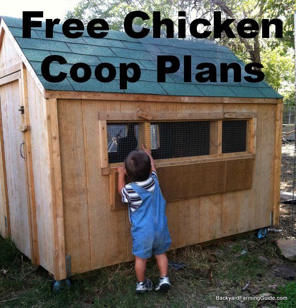Free Chicken Coop Plans To Build A Backyard Chicken Coop  Could You Do This  With