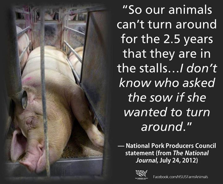 """So our animals can't turn around for the 2.5 years that they are in the stalls..."" -National Pork Producers Council"