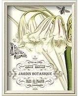 jardin botanique i framed giclee print wall art
