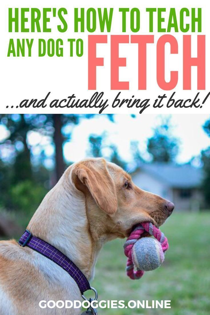Here S How To Teach Your Dog To Fetch Something And Actually