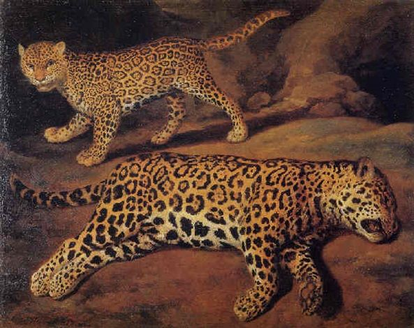 Two jaguars by Jacob Gerritsz Cuyp