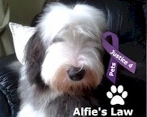Alfie's Law - Animals in the UK Need Your Help!
