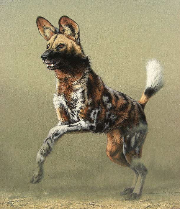 This is a picture of Invaluable African Wild Dog Drawing