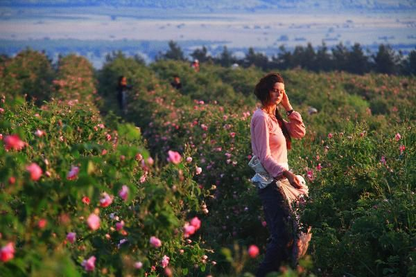 bulgarian rose festival - frolic! | Bulgarian rose, Bulgaria, Romantic travel