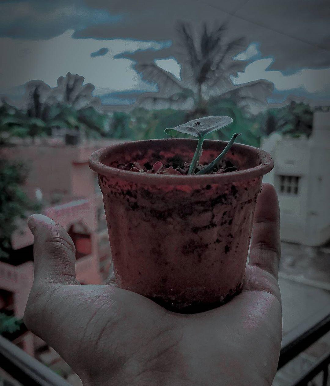 حياة وسط بؤس🌱✨ الصورة كاملة في #الستوري  ★٭ . . . #india #karnataka #bangalore #plants #planet #life #dispair #bright #green #photo #photography #photographer #death #hope #human #humanity #loveliveserve #thankyou #camera #lightroom #photoedit #shot #shotoniphone #picsart #pure #love #peace #salam #war   @lightroom @xiaomi.global @xiaomiindia @redmiindia @redmik_20pro @miuiofficial @miuiindiaofficial