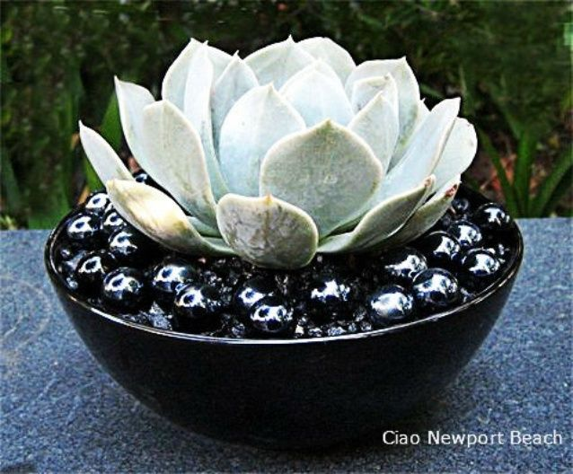 Decorated Cooking Urn A Blog About Decorating Fashion Gardens The Beach Gardening