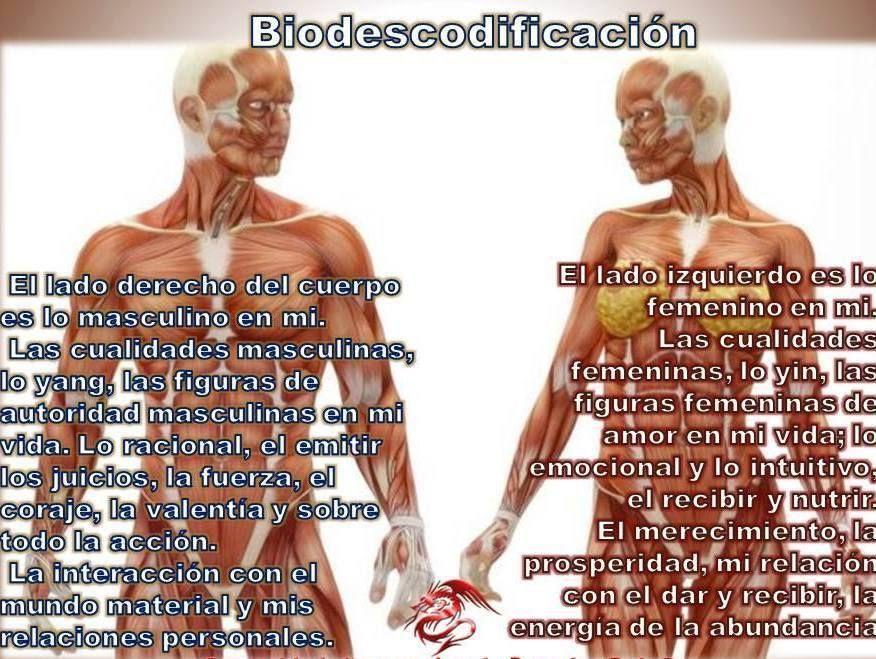 Biodescodificación Masculino Constelações Sistemicas